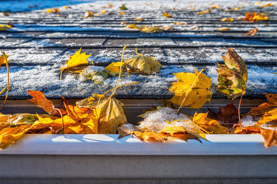 frosted leaves in the gutter on iced roof